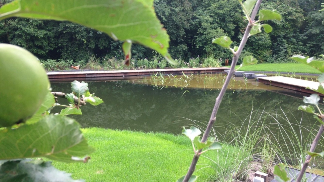 Moeras- en waterplanten filteren het water
