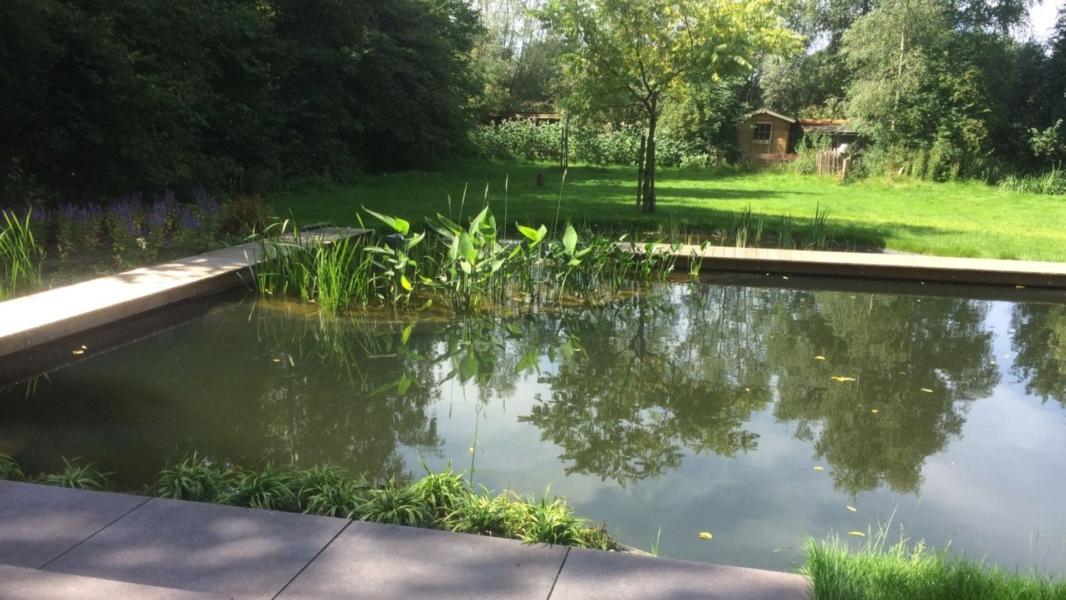 Moeras- waterplaten in een natuurlijke zwemvijver