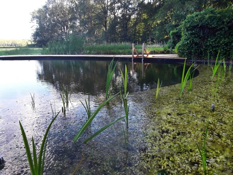 Natuurlijke zwemvijver met bestaande vijver